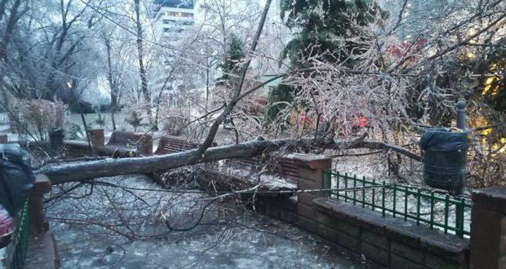 رومانيا: سقوط 800 شجرة في يوم واحد بسبب عاصفة ثلجية!