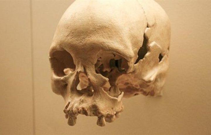 علماء يكتشفون جمجمة يعود تاريخها إلى 35 ألف سنة