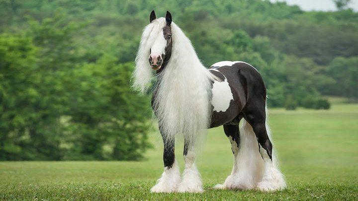أنواع الخيول في العالم.. تعرف على أسرعها وأغلاها (صور)
