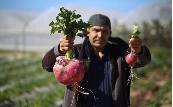 خضروات تخطَّت المعقول..مزارعون متهمون ومسؤولون مقصرون