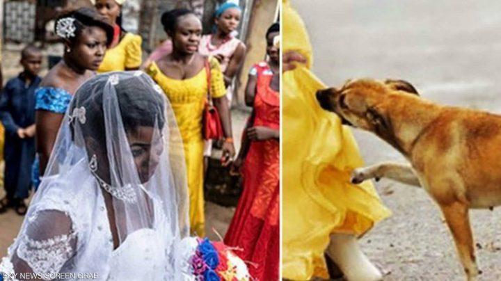 """قصة """"كلب بطل"""" أنقذ العشرات من """"انتحارية الزفاف"""""""
