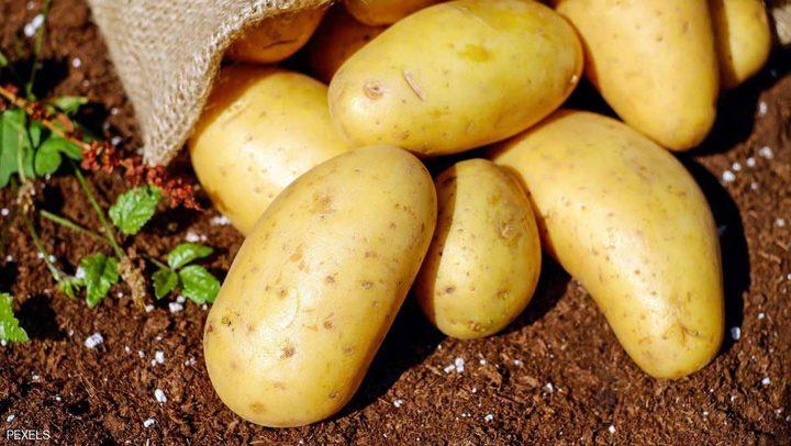"""البطاطس """"قد تختفي"""" من الأسواق!"""