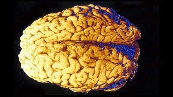 سبب غير متوقع لتطور دماغ الإنسان