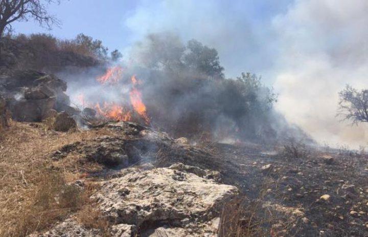 حرق الأعشاب وكيفية التعامل معها من قبل المزارعين