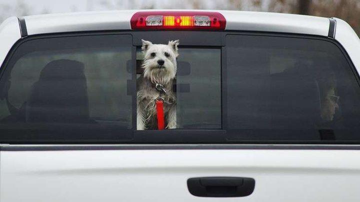 كلب يخرج صاحبه من غيبوبته قبل فوات الأوان!
