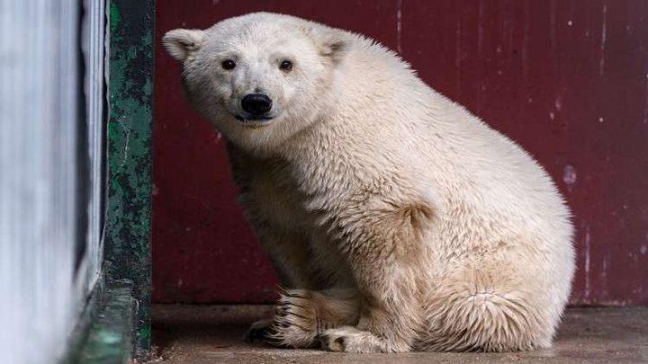 """""""الدببة البيضاء"""" تعلن الطوارئ في شمال روسيا"""