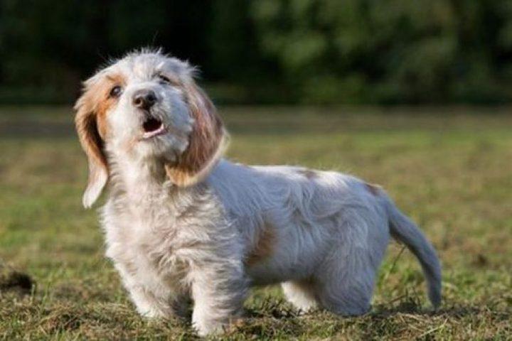 بلدة في فرنسا تحظر نباح الكلاب في الأماكن العامة!