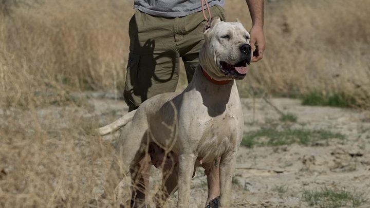 علماء: الكلاب أصبحت خطرا جديا يهدد الحياة البرية