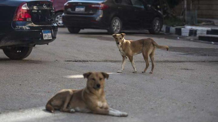 مصر.. أجانب يذبحون كلبا بوحشية قبل أكله