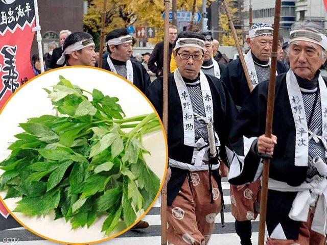 """نبتة الساموراي """"تبطئ الشيخوخة"""""""
