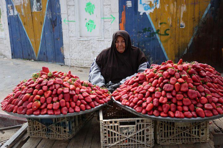 امرأة فلسطينية تبيع الفراولة في أحد شوارع مدينة غزة في 21 فبراير 2019.