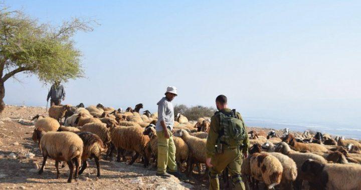 مستوطنون يهاجمون رعاة أغنام جنوب الخليل