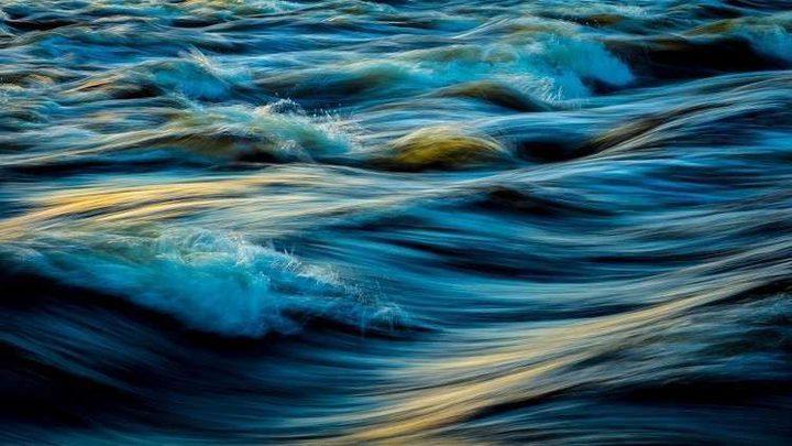 اكتشاف حيوان بحري عمره 20 مليون سنة عن طريق الصدفة