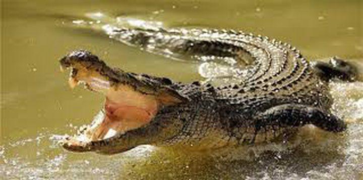 شاهد كيف تمكن تمساح مفترس من ابتلاع ثعبان طوله 3 أمتار!