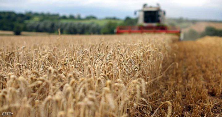 العراق يسعى لشراء القمح