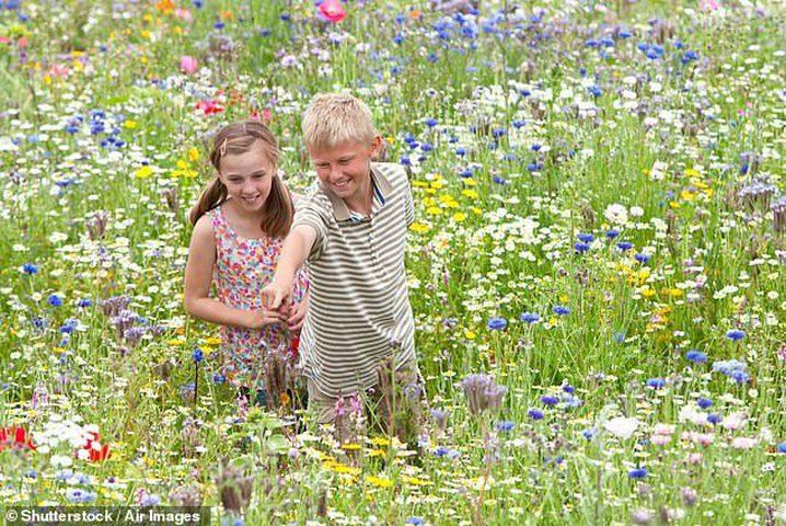 كيف تؤثر الحياة في المناطق الخضراء في الطفولة على الصحة العقلية