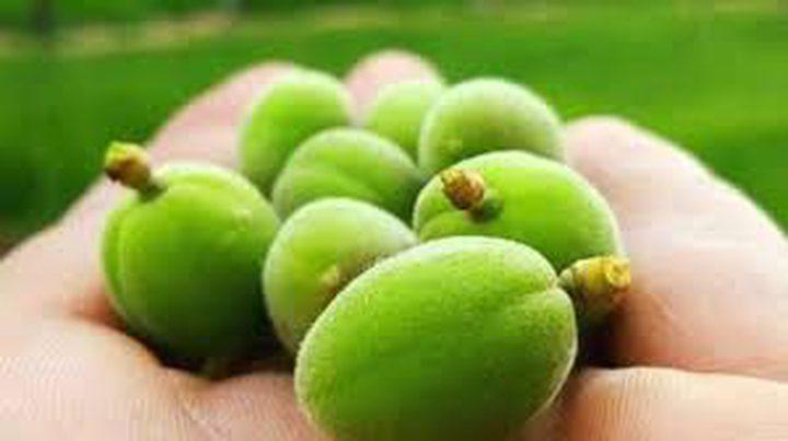 أهمية تناول اللوز الأخضر لصحة الجسم
