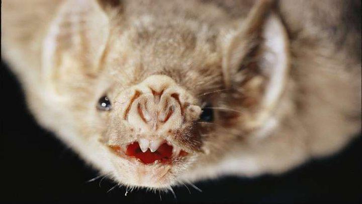 اكتشاف خطر الخفافيش على حياة البشر!