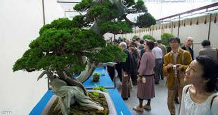 سرقة شجرة عرعر نادرة عمرها 400 عام !