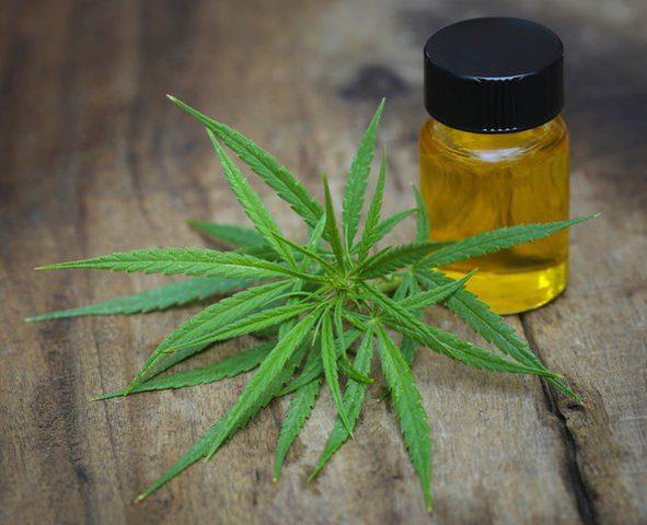 دراسة: أدوية الماريجوانا فعالة وآمنة الاستخدام بالنسبة لكبار السن