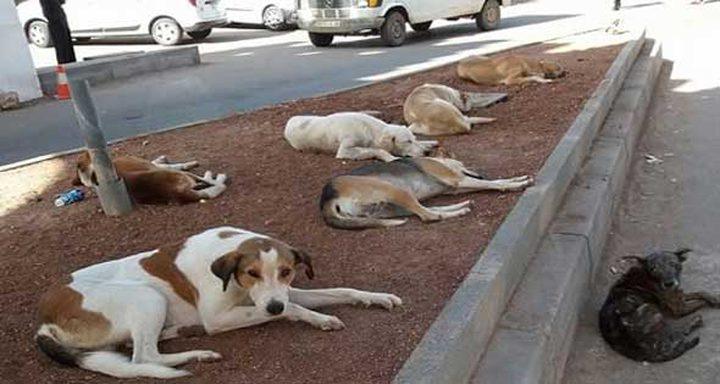 دار الافتاء المصرية: الشرع يجيز قتل الكلاب العقور المؤذية