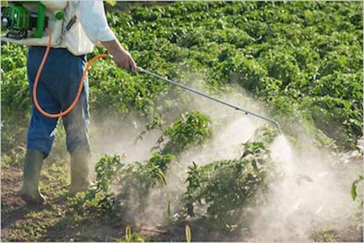 """""""التعليم البيئي"""": مبيدات الأعشاب تدق أجراس الخطر"""