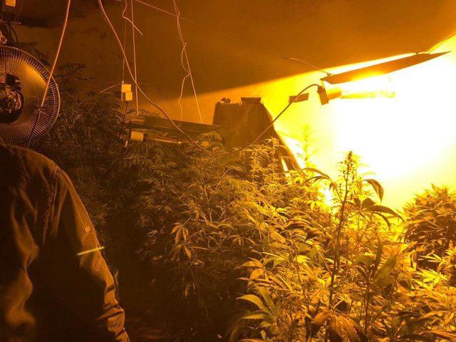شرطة الضواحي تضبط مشتلا لزراعة الماريجوانا في العيزرية