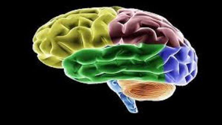 """اكتشاف """"خلايا الوقت"""" في الدماغ البشري"""
