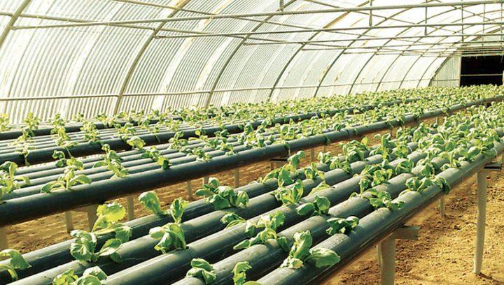 إطلاق برنامج التنمية الزراعية الفلسطينية في نيكاراغوا