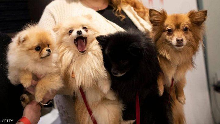 """علماء يحذرون من """"إنفلونزا الكلاب"""" المميتة"""