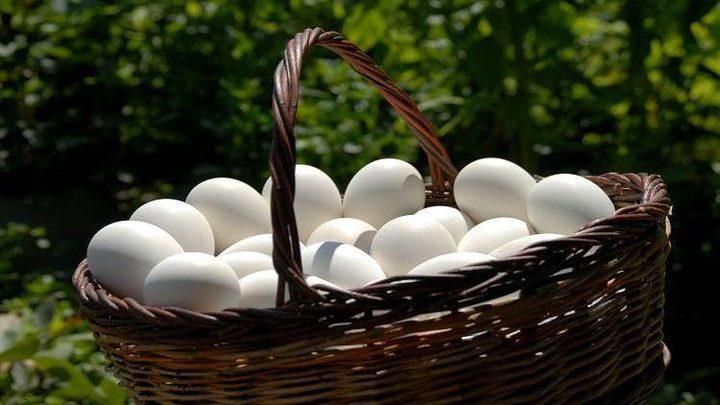 اكتشاف بيض دجاج عمره 2500 سنة