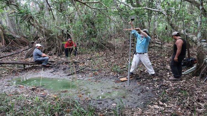 اكتشاف حقول قطن كانت تزرعها قبائل المايا
