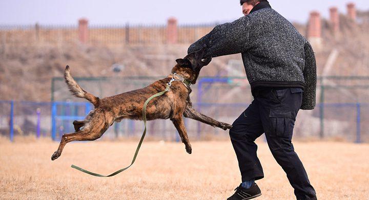 استنساخ أول كلب شرطة في الصين