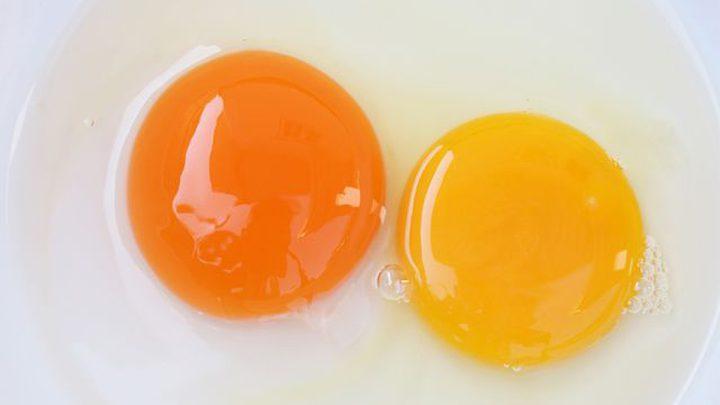 هل صفار البيض الداكن له قيمة غذائية أعلى من الفاتح؟