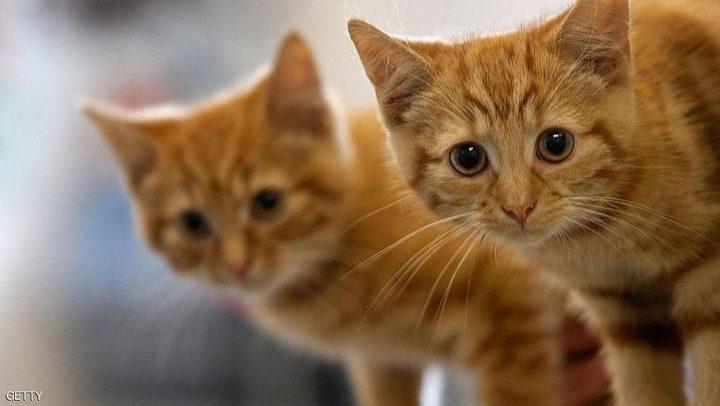 """دراسة تكشف """"تصرفا ماكرا"""" للقطط"""