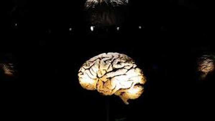 ما هو تأثير الدماغ على أحلامنا؟