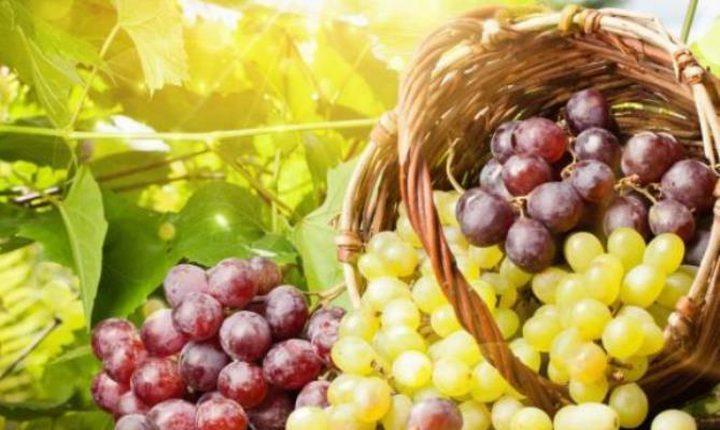 فوائد فاكهة العنب الصحية للحامل