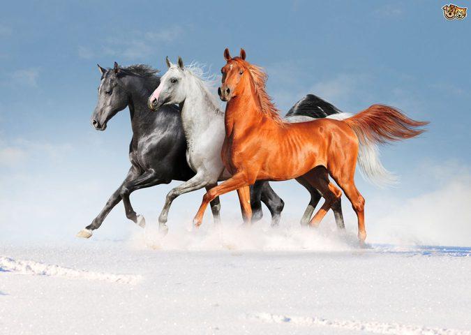 العلماء يؤكدون قدرتهم على استنساخ حصان من 42 ألف عام