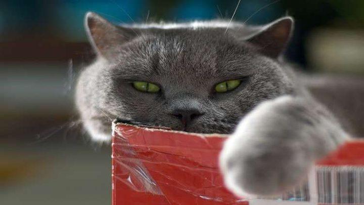 دراسة تكشف مكر القطط في التعامل مع البشر!