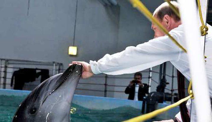 """الجيش الروسي يتعلم """"قوى نفسية خارقة"""" من الدلافين"""