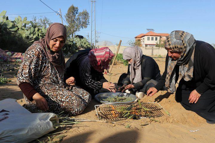 نساء فلسطينيات يحصدن القمح لتحضير الفريكة في حقل في خان يونس في جنوب قطاع غزة ، في 13 أبريل / نيسان 2019.