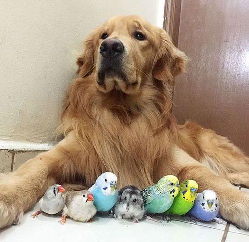 أنواع من الحيوانات الأليفة يجب أن تبعدهم عن وجهك..