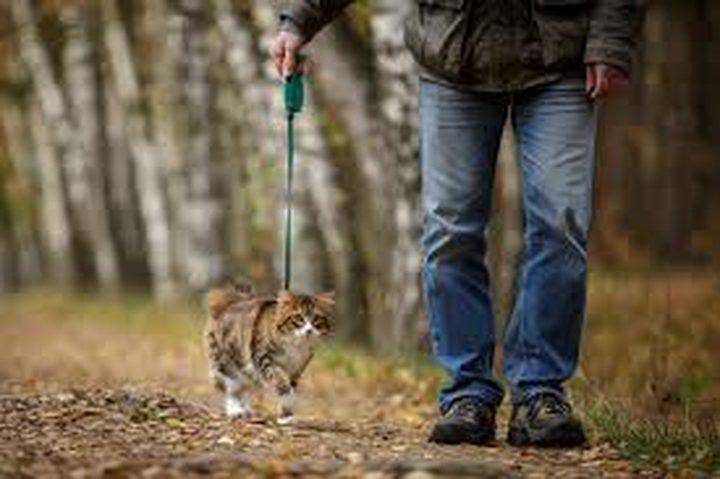 لماذا يجب عدم السماح للقطط المنزلية بالخروج