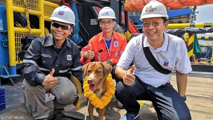 """الكلب """"الناجي"""".. سبح 220 كيلومترا قبل إنقاذه"""