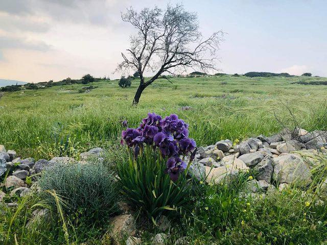 قرية رابا في جنين .. قطعة من سحر الطبيعة الخلابة