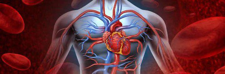 طرق طبيعية لتنشيط الدورة الدموية بالجسم