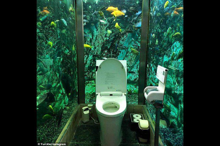 مقهى يابانى ينفق 200 ألف استرلينى لإنشاء حمام محاط بالأسماك
