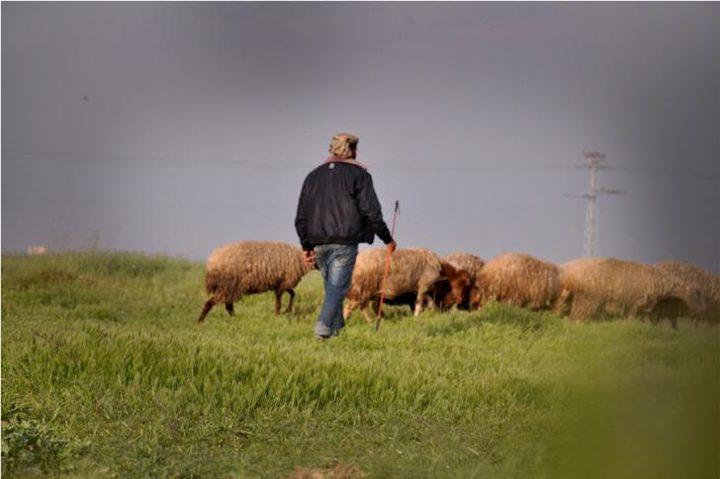نيران الاحتلال تستهدف مزارعين ورعاة أغنام شرق غزة