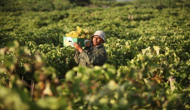 خطة شاملة لوزارة الزراعة لـ3 أشهر
