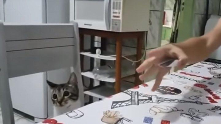 موقف طريف لشاب يخادع قطته ويصيبها بالدهشة! (فيديو)